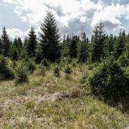 Výsadba stromů je zbytečná, když je necháme sežrat zvěří, upozorňují ekologové