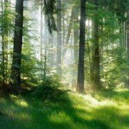 Stromy mají podzemní síť připomínající internet. Sdílí živiny, posílají informace nebo záškodničí